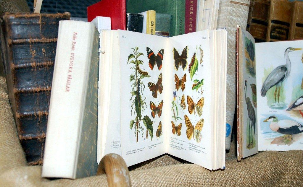 books-55589_1280-1024x633