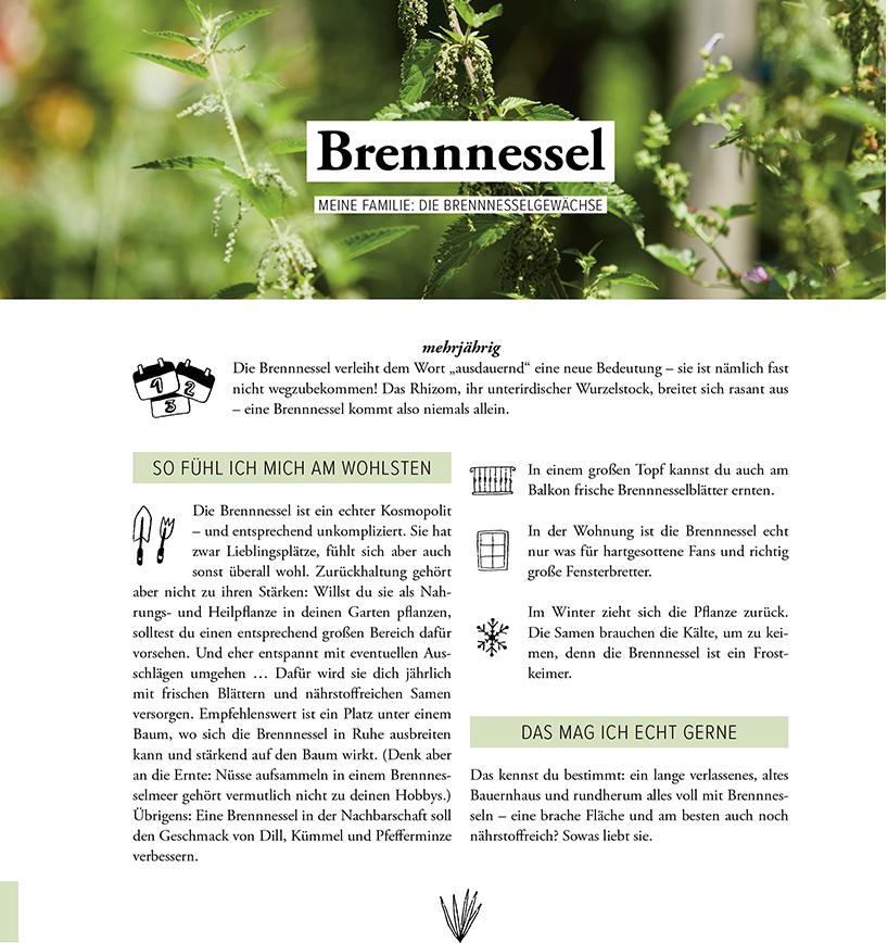Kräuterzirkus Buch Brennessel